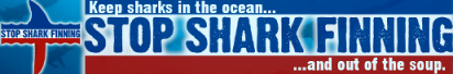 shark-banner