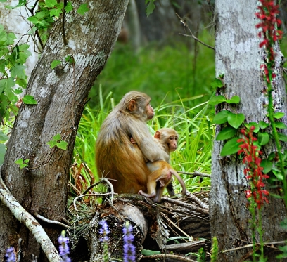 monkey in the wild2